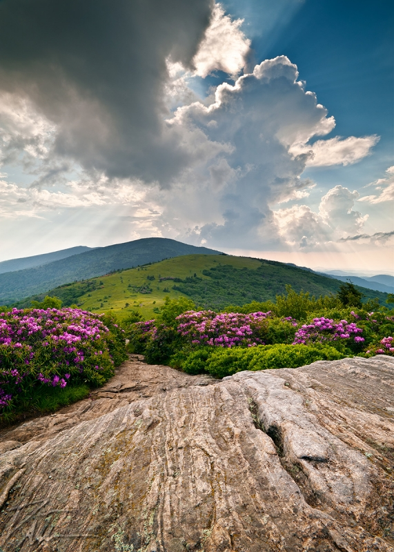 Roan Mountain Rays – Jane Bald Landscape
