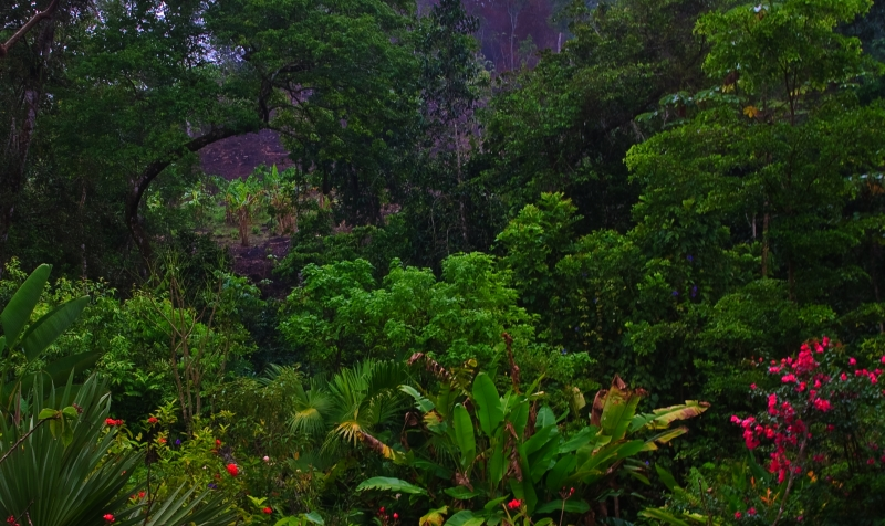 Lush Beautiful Rainforest