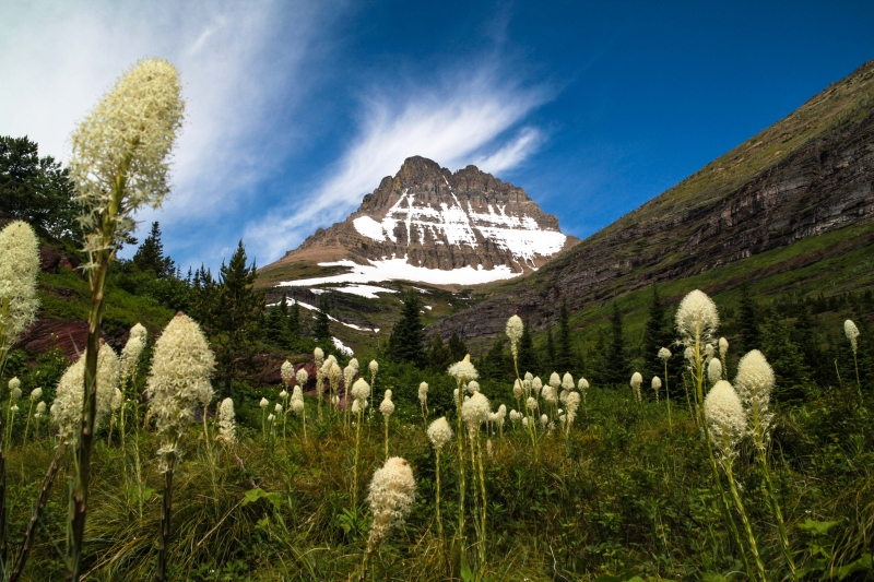 Mountains And Bear Grass: Glacier National Park