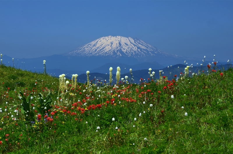 Mt. St. Helens Floating On Flowers