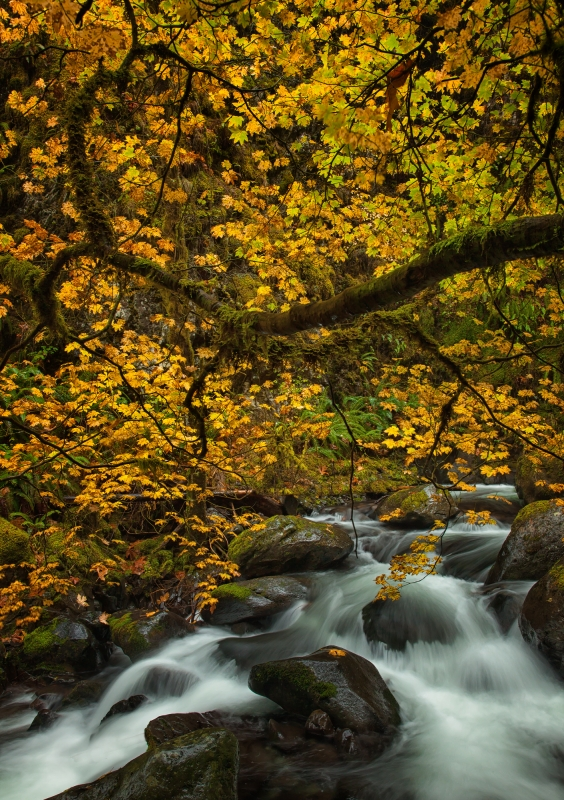 Fall In The Columbia Gorge
