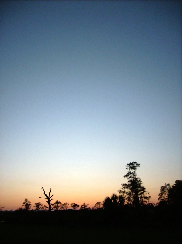 Evening With Trees