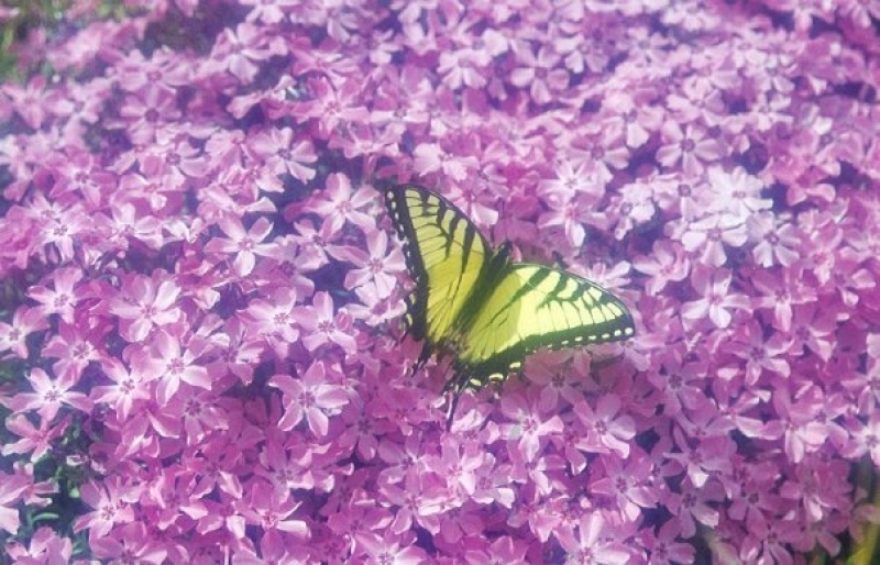 Butterfly In Soft Focus