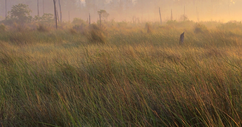 Misty Morning Marsh