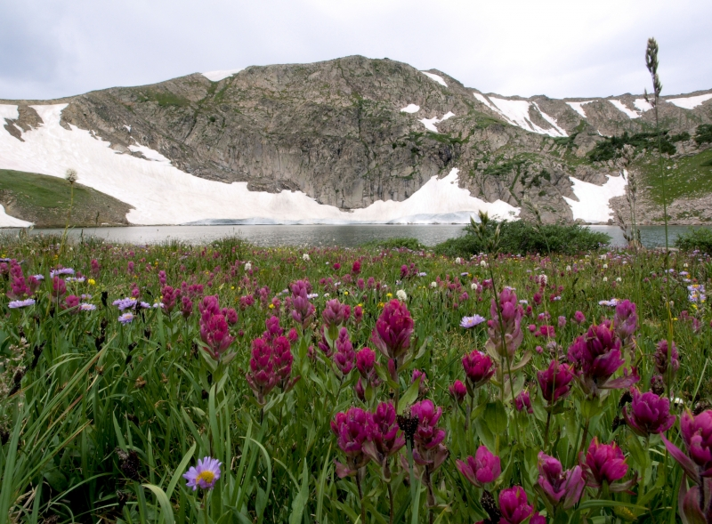 King Lake Wildflowers