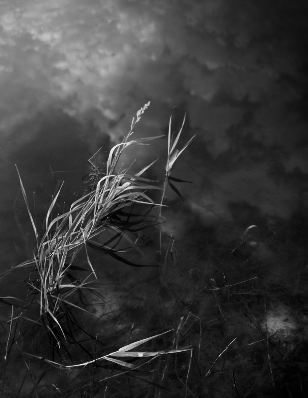 Reeds In The Clouds
