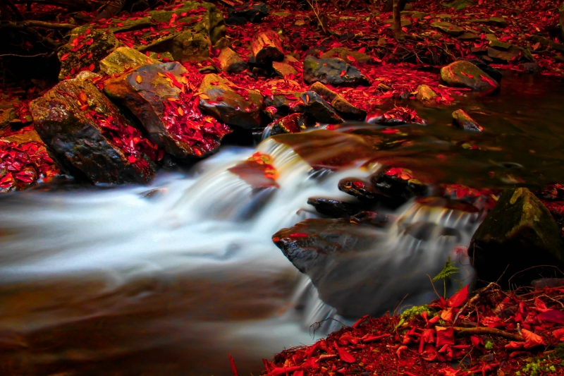 Autumn Color And The Water Falls