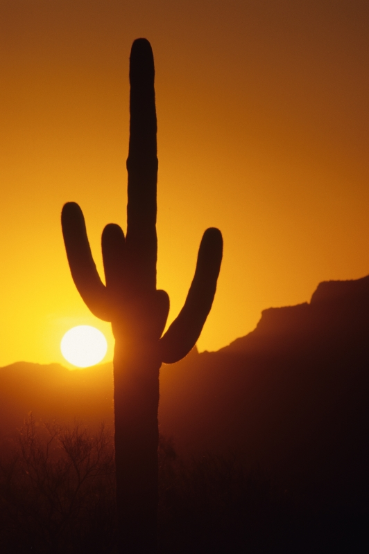 Saguaro And Superstition Mountain Sunset