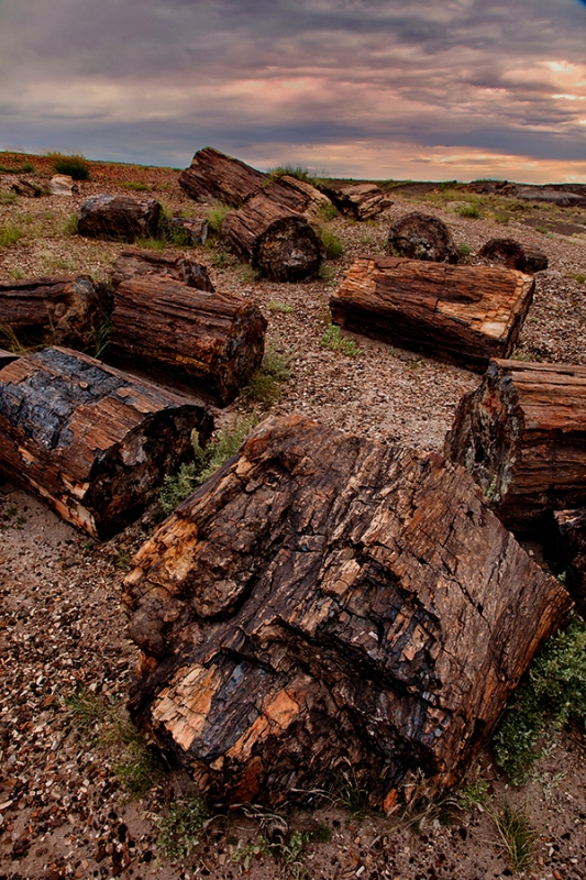 Petrified Trees, Petrified Forest National Park