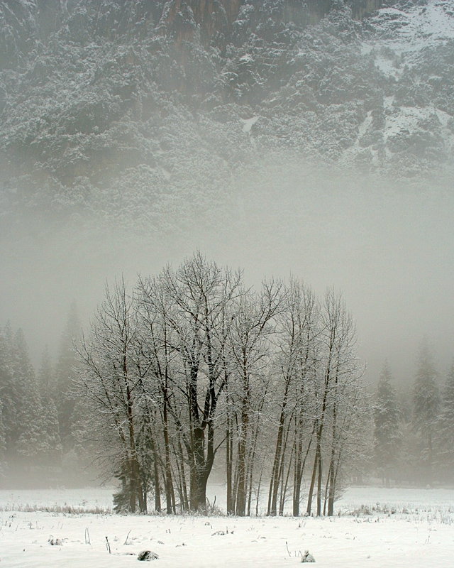 Ahwanee Meadow Trees In Mist