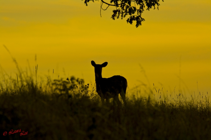 Sunset Deer Silhouette