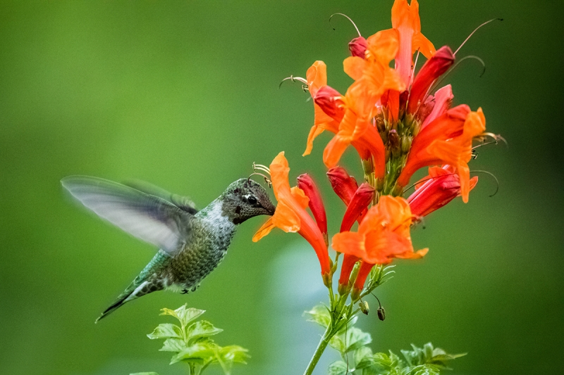 Hummingbird Delight