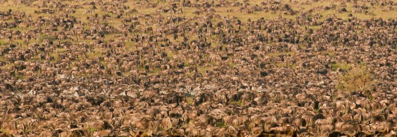 Serengeti Traffic Jam