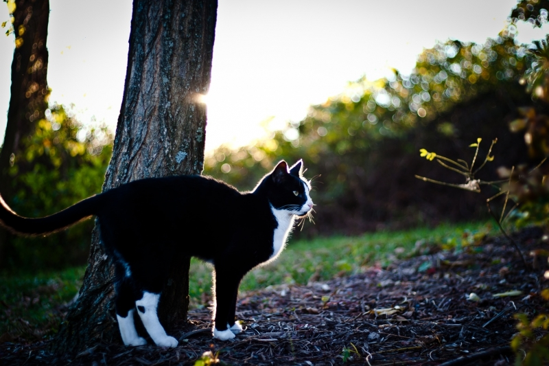 Backlit Cat