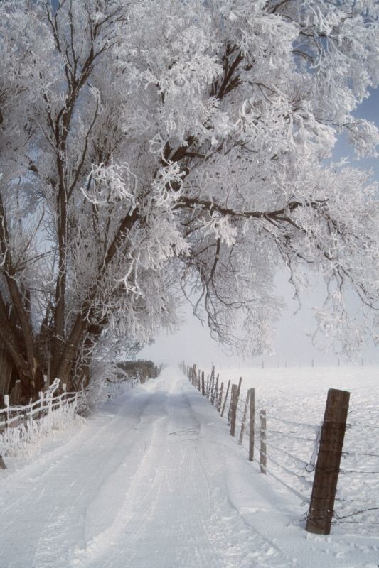 Frosted Lane