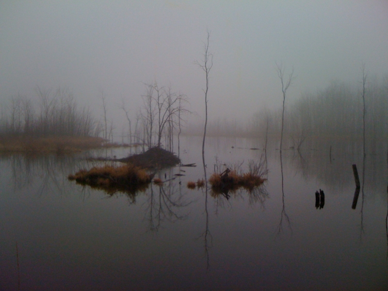 Morning Fog At Hullete Marsh