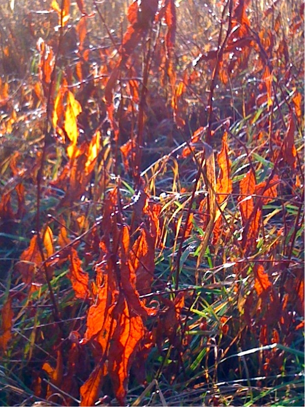 Grass On Fire With Fall Leaves