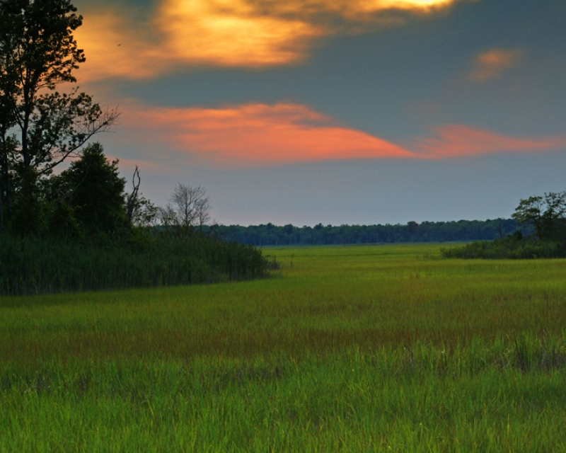 Early Evening Turkey Point Marsh