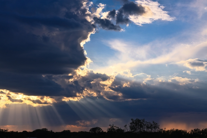 Rays Of Life