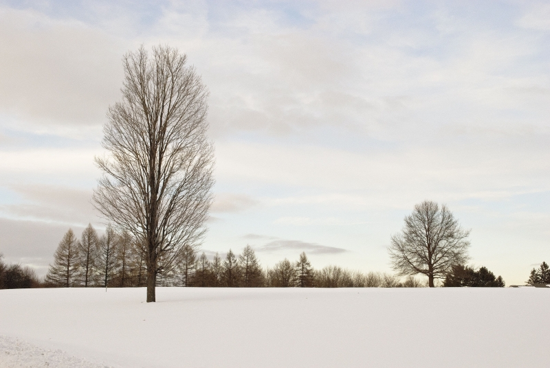 Two Trees On A Snow Field