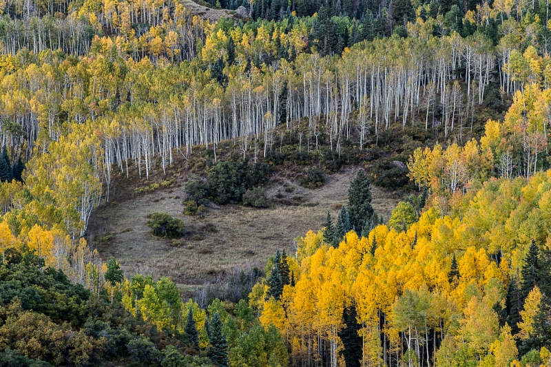 Owl Creek Aspens