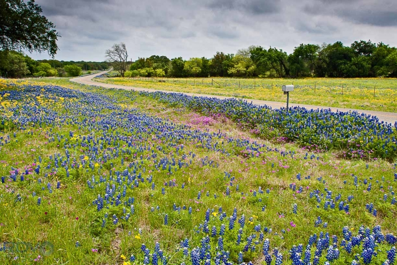 Texas Country Road