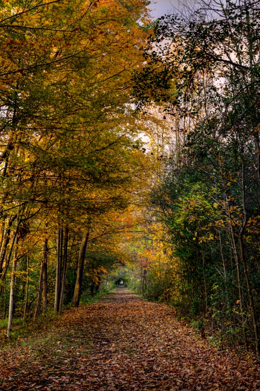 Ontario Pathway Trail