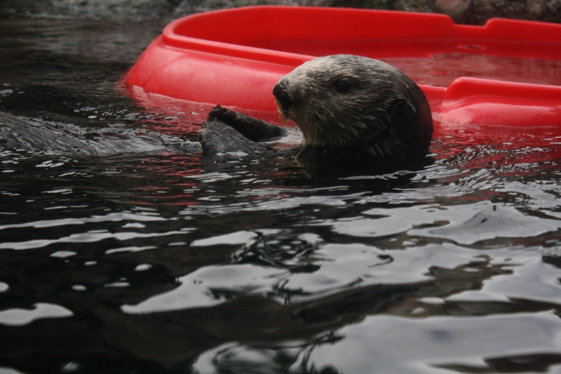 Look At Me.. Im An Otter!