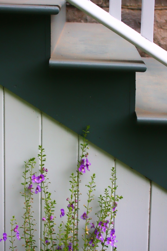 Flowers And Stairs