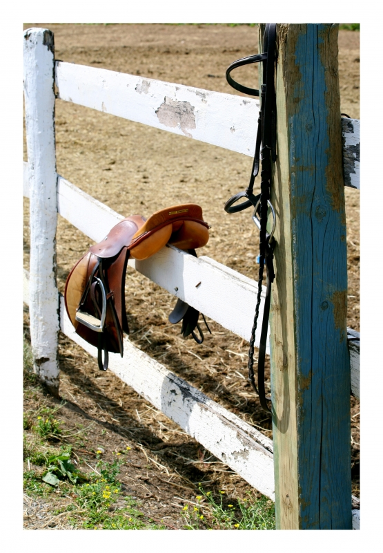 Saddle On Fense