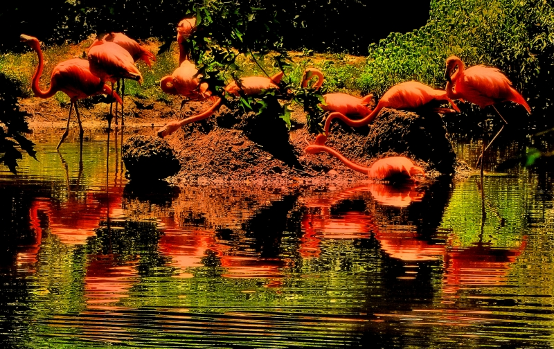 Red Light Of Flamingos