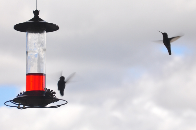 Hummingbirds And Feeder