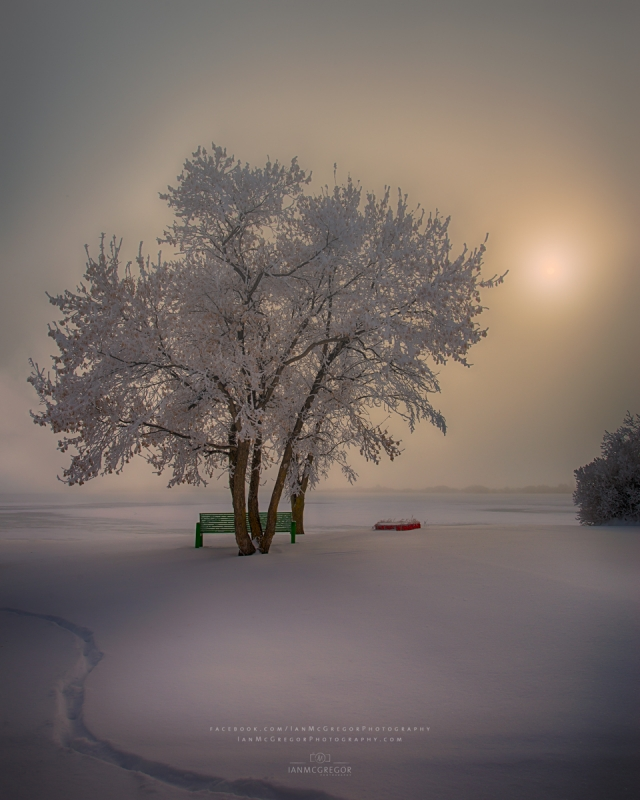 Winter Beauty 5903_12