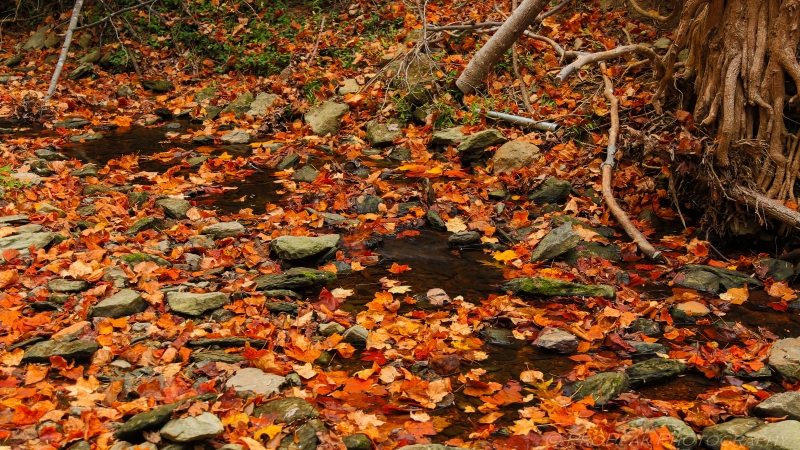 Floating Rocks In A Sea Of Leaves