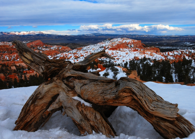 Log, Bryce Canyon
