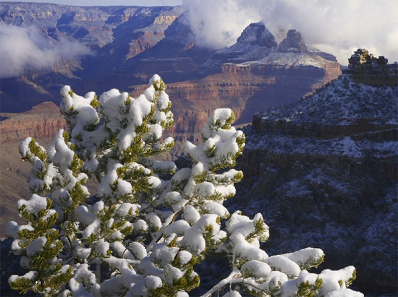 Surprise Snow At The Grand Canyon