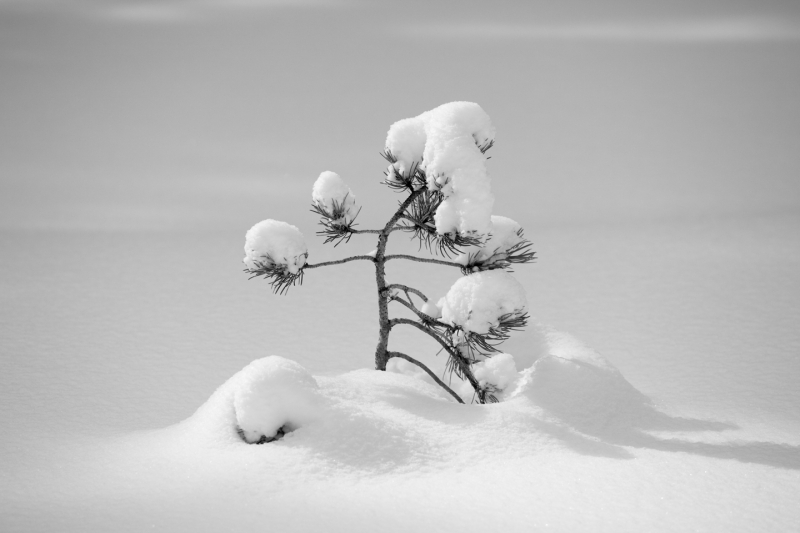 Little Winter Tree