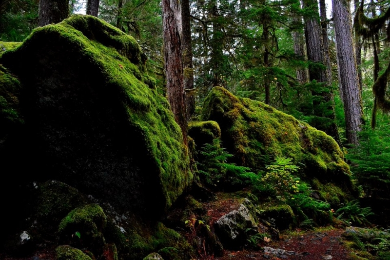 Mossy Boulders
