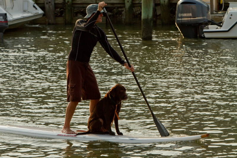 Paddling On Shem Creek