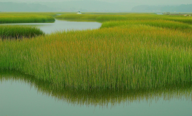 Jones River Salt Marsh