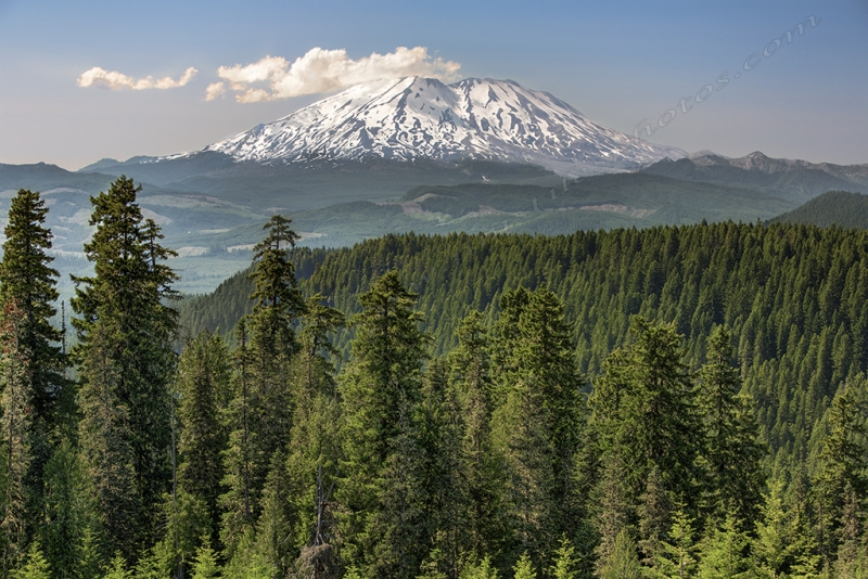 Mount Saint Helens From Mcclellan Overlook