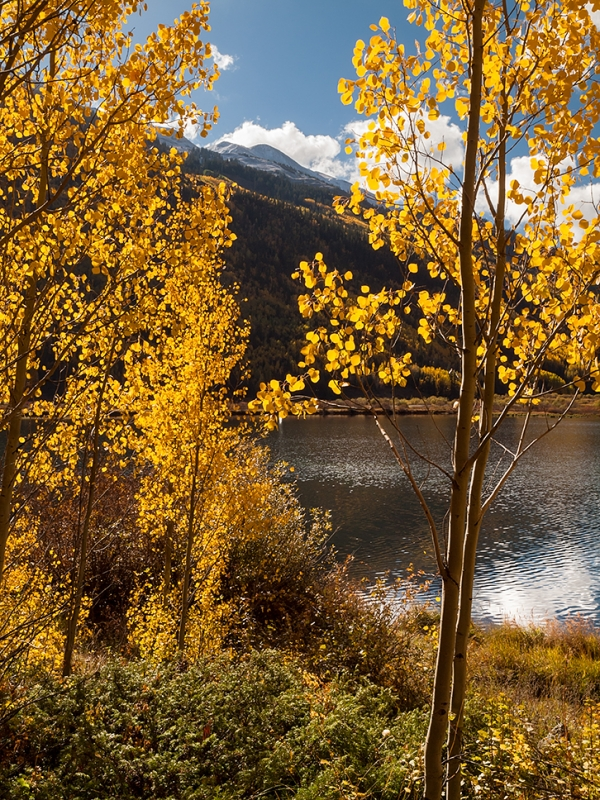 Crystal Lake Aspens