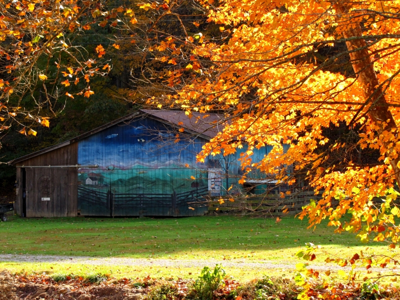Barn Painting With Autumn Foliage