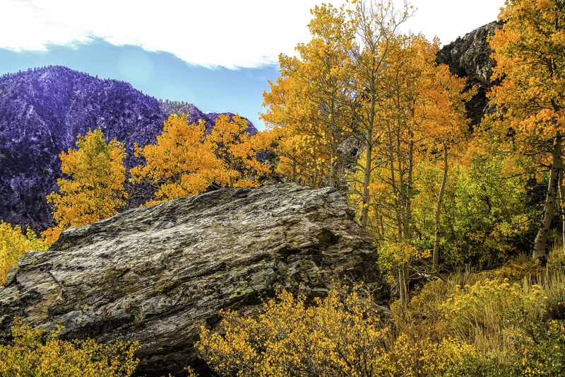 Golden Aspens Surround A Granite Outcrop Along The June Lake Loop In The Eastern Sierra