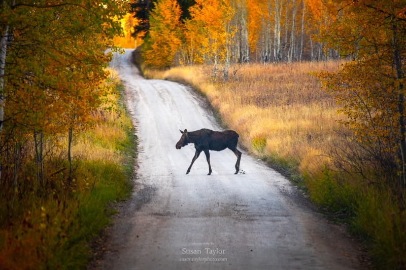 An Autumn Evening Stroll In The Tetons