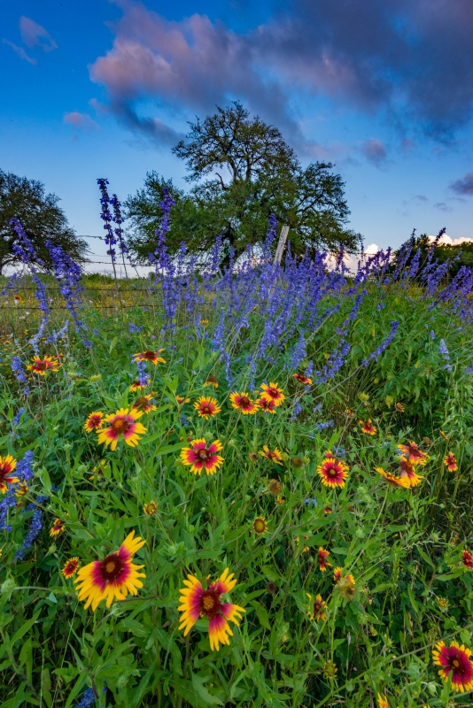 South Texas Wildflowers