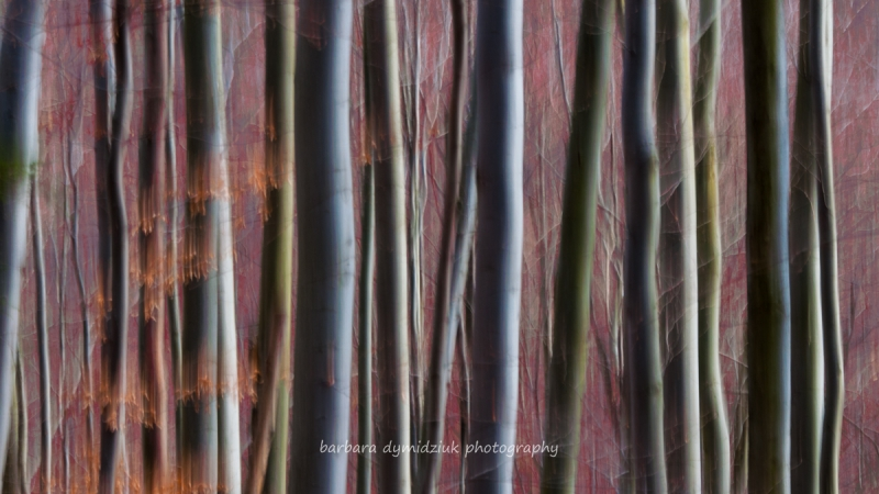 Trees Abstraction