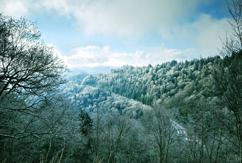 Early Spring Snow At The Smokies