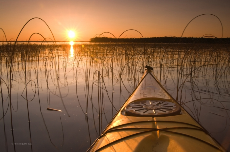 Kayaking Through The Reeds At Sunset