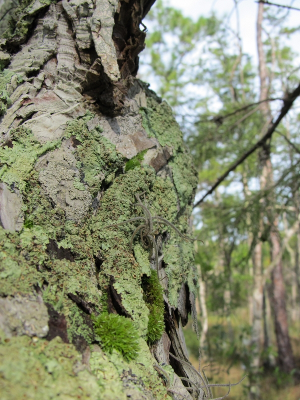 Mossy Tree In The Swamp